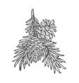 hand drawn pine tree branch vector image