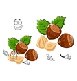 Cartoon isolated hazelnut with brown nuts vector image