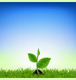 green grass with young plant vector image