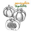 pumpkin vegetable set hand drawn vector image