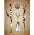 hand drawn plants vector image