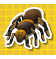 Poisionous spider on yellow background vector image