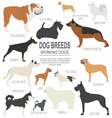 Dog breeds Working watching dog set icon Flat vector image