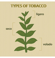 types of tobacco vector image