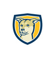 Husky Shar Pei Cross Dog Head Shield Cartoon vector image