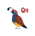 Quail Funny Alphabet Animal vector image