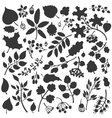 Autumn leavesbranchesberries setFall silhouette vector image