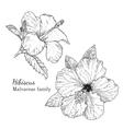 Ink hibiscus hand drawn sketch vector image