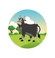 bull cartoon colorful design vector image
