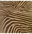 savannah pattern background design elements zebra vector image