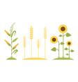 Wheat field sunflower icon cartoon vector image