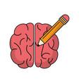 brain idea pencil knowledge vector image