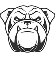 The head of a fierce bulldog vector image