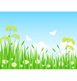 green meadow with flowers and vector image