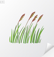 Bunch of wheat on white background vector image
