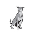 Husky Shar Pei Cross Dog Sitting Cartoon vector image
