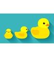 Yellow rubber ducks vector image