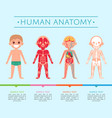 human anatomy poster with child vector image