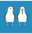 Two albatrosses are sitting next to each other vector image