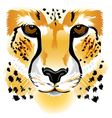 Cheetah face vector image