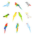a set of parrots in a flat style vector image