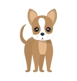 Dog and pets cartoon graphic design vector image