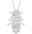 Beetle Coloring for adults vector image