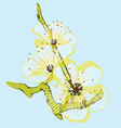 yellow flower branch vector image