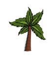 palm tree symbol vector image