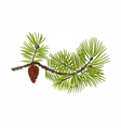 Pine branch and pine cone natural background vector image