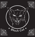 black cat head in frame witchcraft theme vector image
