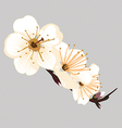 orchid flower on a gray background vector image