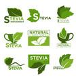 stevia sweetener sugar natural substitute vector image
