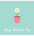 Daisy in pot Happy Valentines Day card vector image