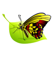 butterfly on a leaf vector image vector image