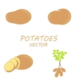Potatoes icons set vector image