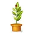 Plant and bug vector image