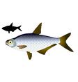 White eye fish vector image
