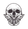 skull with moth vector image vector image