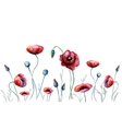 Watercolor poppy flowers vector image