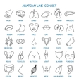 Anatomy line icons vector image