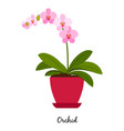 orchid plant in pot vector image