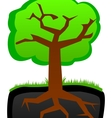 Tree roots and krone vector image