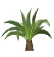 tropical exotic high detailed palm tree vector image