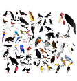 collection of images of birds vector image vector image