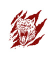 Angry wolf inside paw tear scratch marks vector image