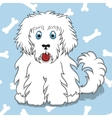 Seamless pattern with white fluffy dog vector image