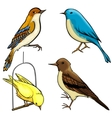 Pack of four cartoon birds vector image vector image