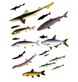 collection of images of fish vector image vector image