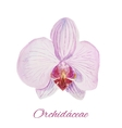 Orchid watercolor painting on white background vector image